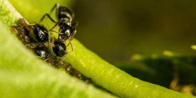 6 απίθανα πράγματα που δεν ξέρατε για τα μυρμήγκια